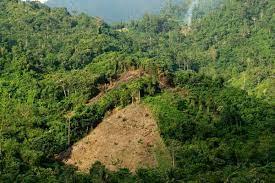 Kegiatan Penatagunaan Kawasan Hutan