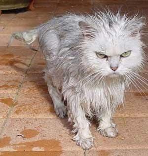 Ekspresi Lucu Kucing Marah Paijo Menulis