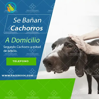 plantilla de anuncio para promocionar y buscar trabajo de bañar cachorros
