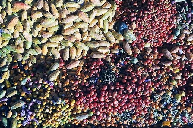 Paraná firma parceria com a Suécia para enfrentamento do desperdício de alimentos