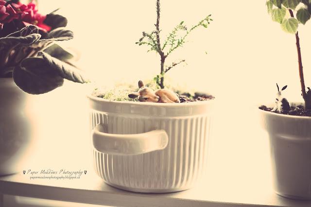 Paper Meadows Photography Blog-Plant Love- Little Fawn, little Tree-mini fairy garden