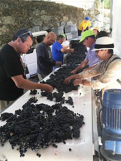 sepaação de uvas para fazer vinhos