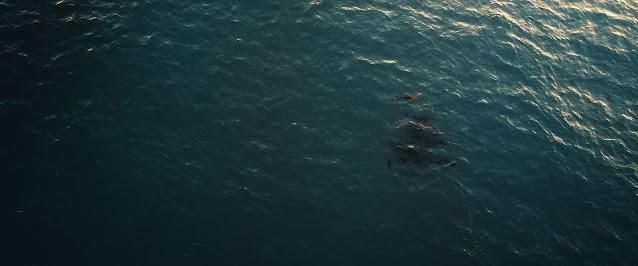 Tiburón Blanco 720p latino