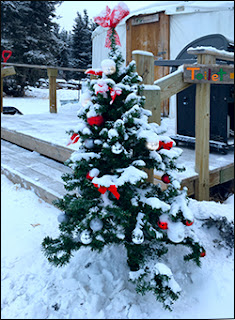 Christmas tree outside yurt at Sky High Wilderness Ranch, Whitehorse, YK