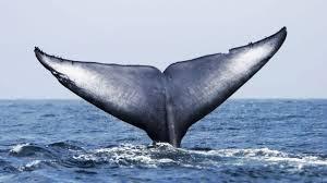 A whale image