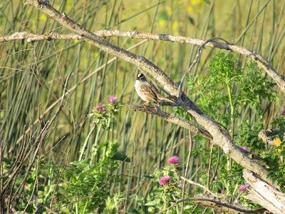 sacramento national wildlife refuge california birding