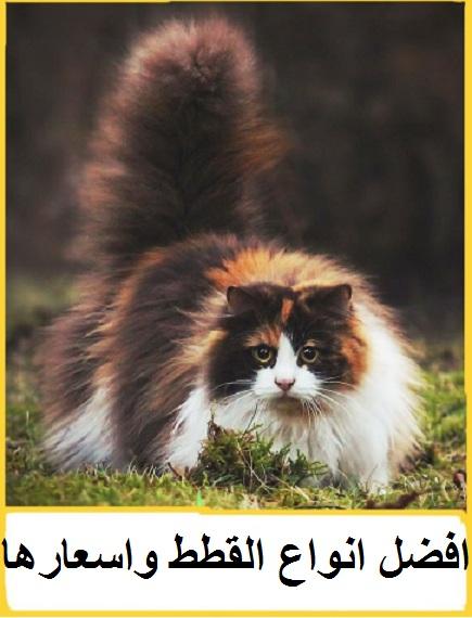 """""""انواع القطط""""  """"انواع القطط بالصور""""  """"انواع القطط واسعارها""""  """"انواع القطط الشيرازى""""  """"أنواع القطط الرومي""""  """"انواع القطط المنزلية""""  """"انواع القطط البيضاء""""  """"انواع القطط الكبيرة""""  """"انواع القطط الهيمالايا""""  """"انواع القطط البرية""""  """"انواع القطط الاليفة""""  """"انواع القطط المصرية""""  """"انواع القطط كلها""""  """"انواع القطط واشكالهم""""  """"انواع القطط واشكالها""""  """"انواع القطط الموجودة في مصر""""  """"انواع القطط فى مصر""""  """"انواع القطط pdf""""  """"www انواع القطط""""  """"انواع القطط بالصور واسعارها""""  """"انواع القطط بالصورة""""  """"انواع القطط بالصور واسعارها فى مصر""""  """"انواع قطط بالصور""""  """"انواع القطط الشيرازى بالصور""""  """"انواع القطط الشيرازى بالصور واسعارها""""  """"انواع القطط المنزلية بالصور""""  """"اسماء انواع القطط بالصور""""  """"انواع واشكال القطط بالصور""""  """"انواع القطط بالصور والاسماء""""  """"انواع القطط واسعارها بالصور""""  """"أنواع القطط واسعارها في مصر""""  """"انواع القطط واسعارها في المغرب""""  """"انواع القطط واسعارها في الجزائر""""  """"انواع القطط واسعارها في السعودية""""  """"انواع القطط واسعارها في العراق""""  """"انواع القطط واسعارها وصورها""""  """"انواع القطط واسعارها في الرياض""""  """"افضل انواع القطط واسعارها في مصر""""  """"احسن انواع القطط واسعارها"""""""