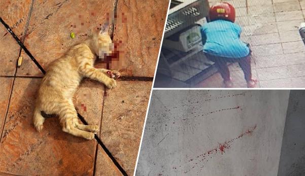 (Video) Gagal curi kereta, suspek lempar anak kucing ke dinding sehingga mati