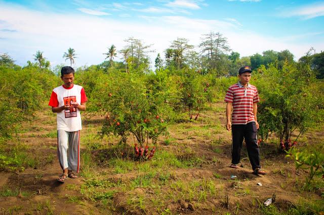 Desa Wisata Sumberwaru Situbondo