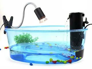 jual-aquarium-kura-kura.jpg