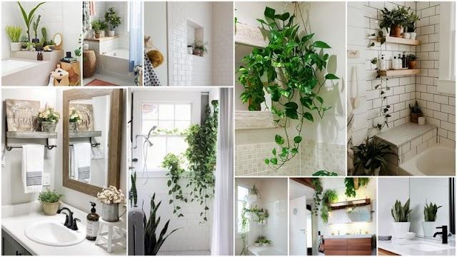 Φυτά στο Μπάνιο: Ομορφιά, μόδα ή ...μπελάς;