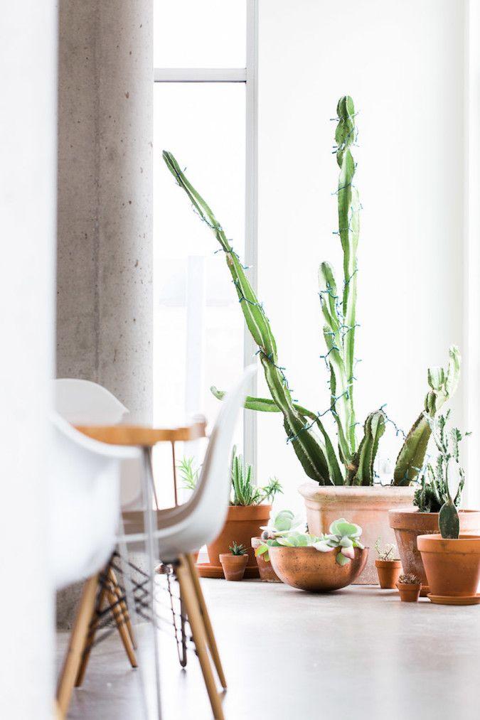hogar con cactus grande