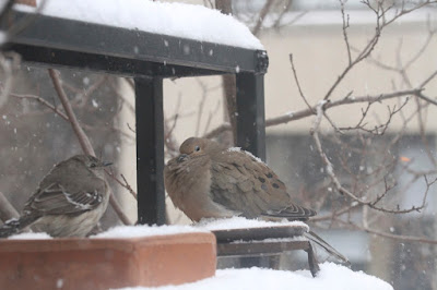 "The ninth bird-themed image in this post. This picture shows two birds standing on a garden shelf during a snowfall. A Northern mockingbird is on the left and a Mourning dove is on the right.  These bird types are featured in my book series, ""Words In Our Beak."" Info re my books is included within another post on this blog @ https://www.thelastleafgardener.com/2018/10/one-sheet-book-series-info.html"