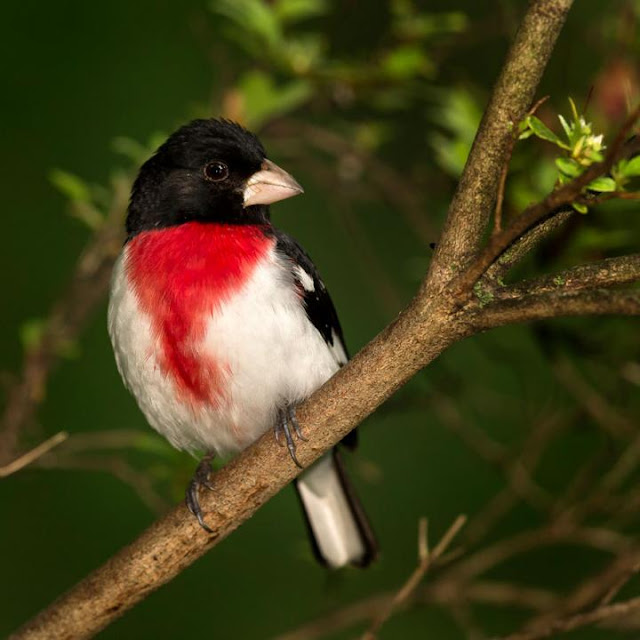 Protecting small forests fails to protect bird biodiversity