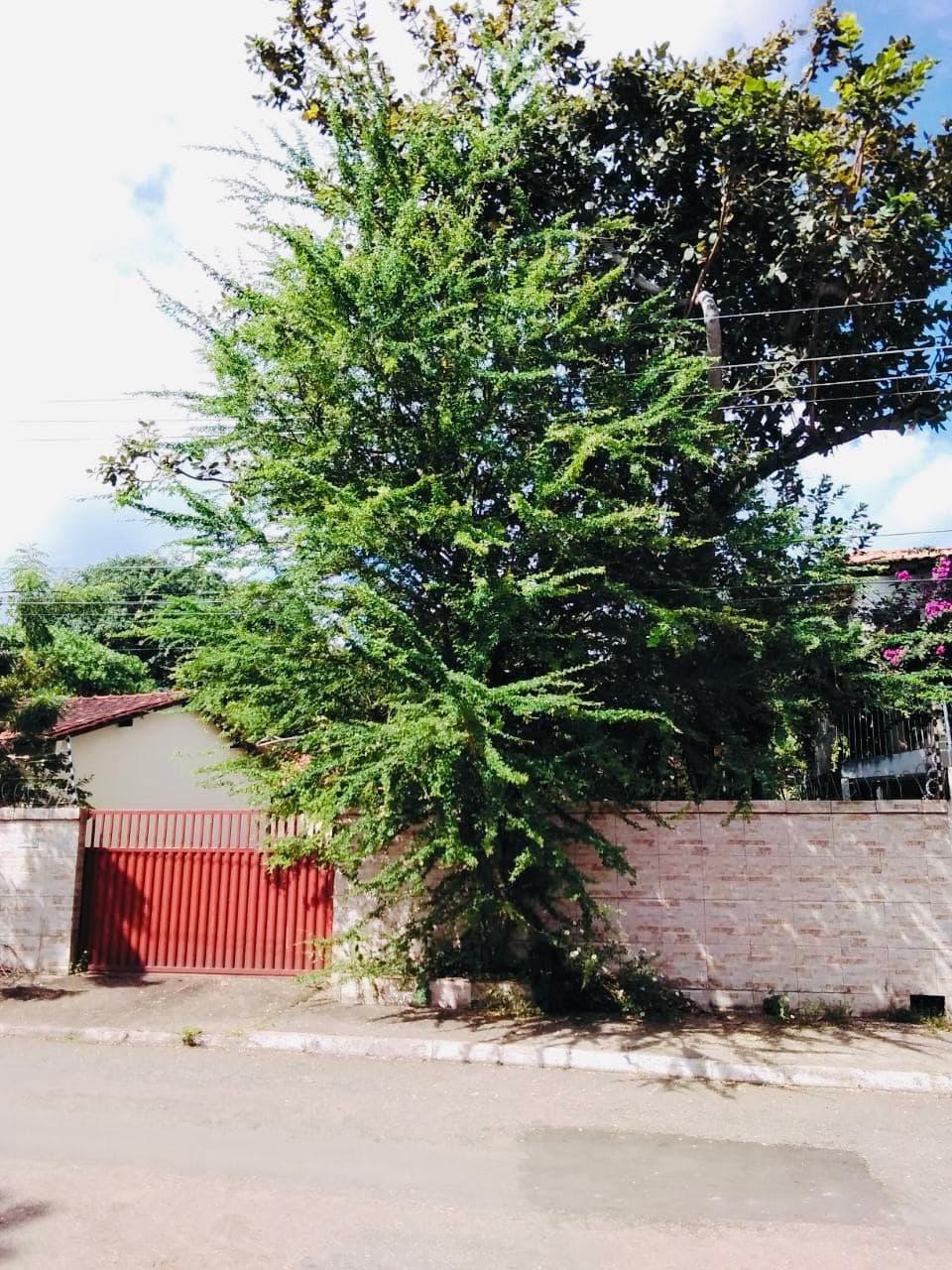Equatorial Pará orienta sobre plantio e podas de árvores nas cidades