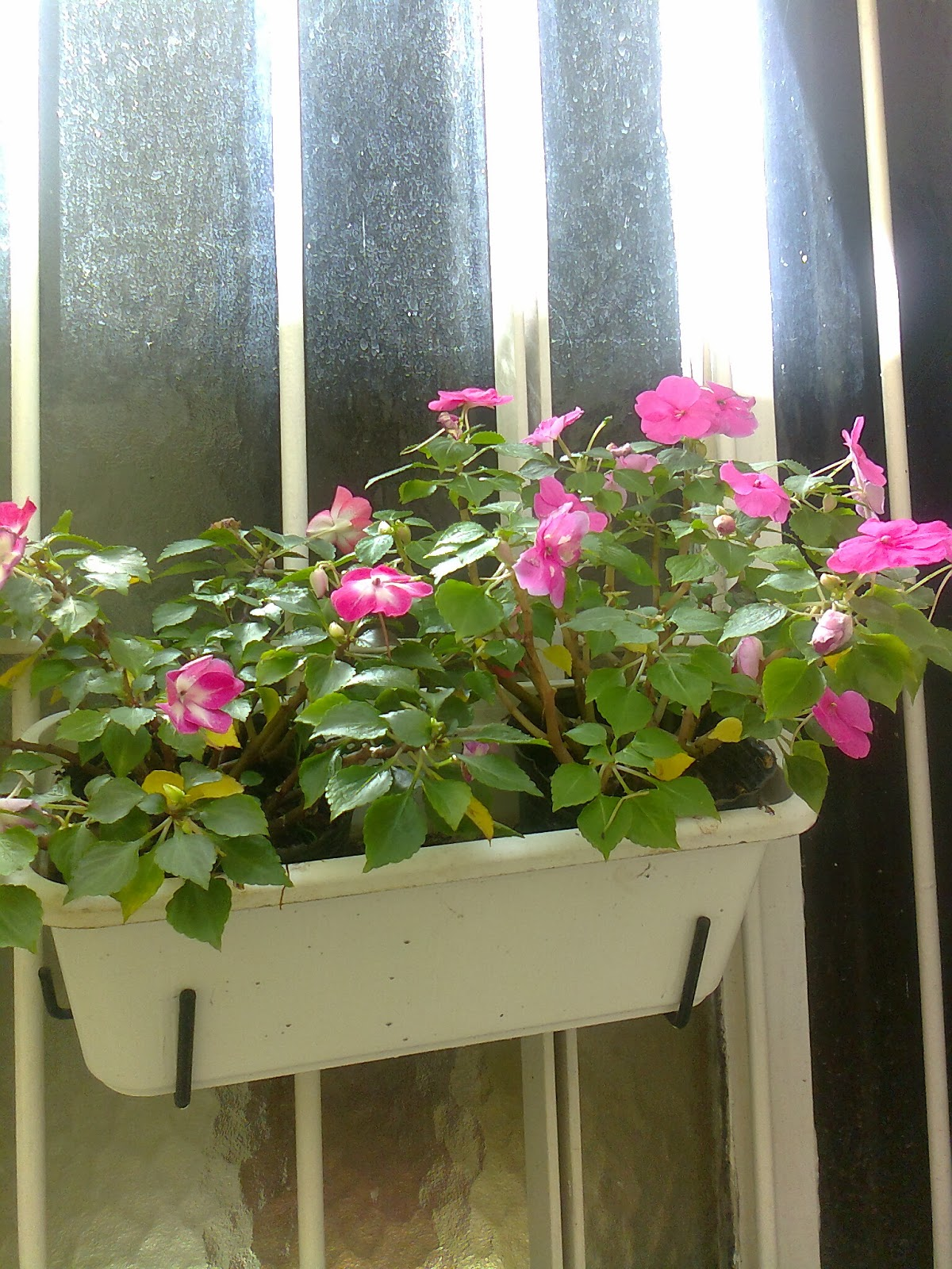 Maceteros en las ventanas for Arreglos de jardines con macetas