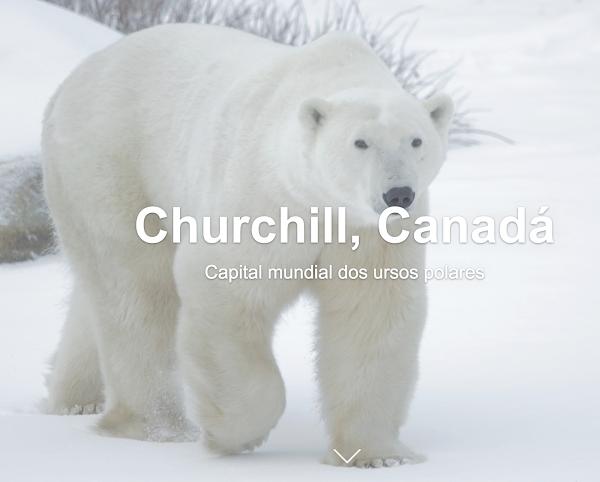 Dia Internacional do Urso Polar: Saiba mais com a ajuda da Google