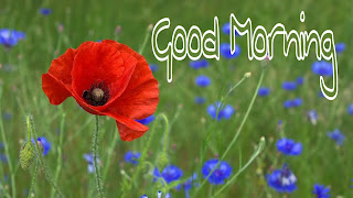 good morning hd flower images