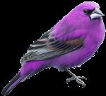 اسماء الطيور بالفرنسية بالصور والاسم