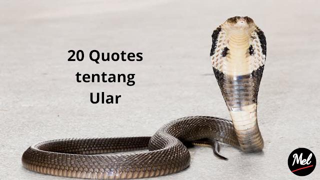 20 Quotes tentang Ular