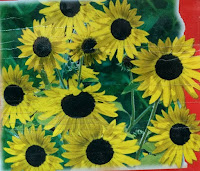 sunflower miniature seeds
