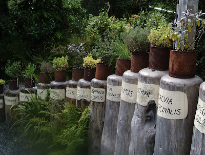 Recycled tin cans as plant containers Centre for Alternative Technology Green Fingered Blog