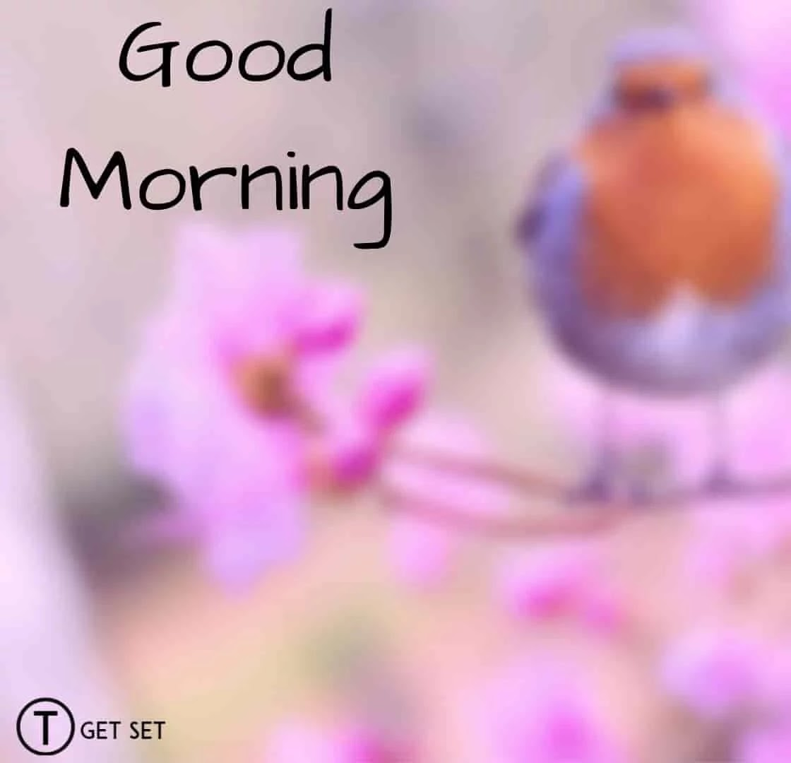 Good-morning-bird-image