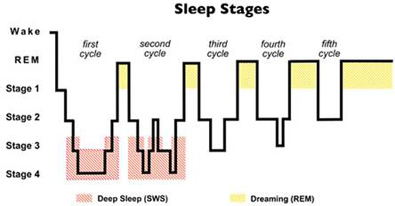 Know Your Dreams: Types of Sleep