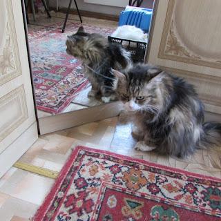 Том и зеркало