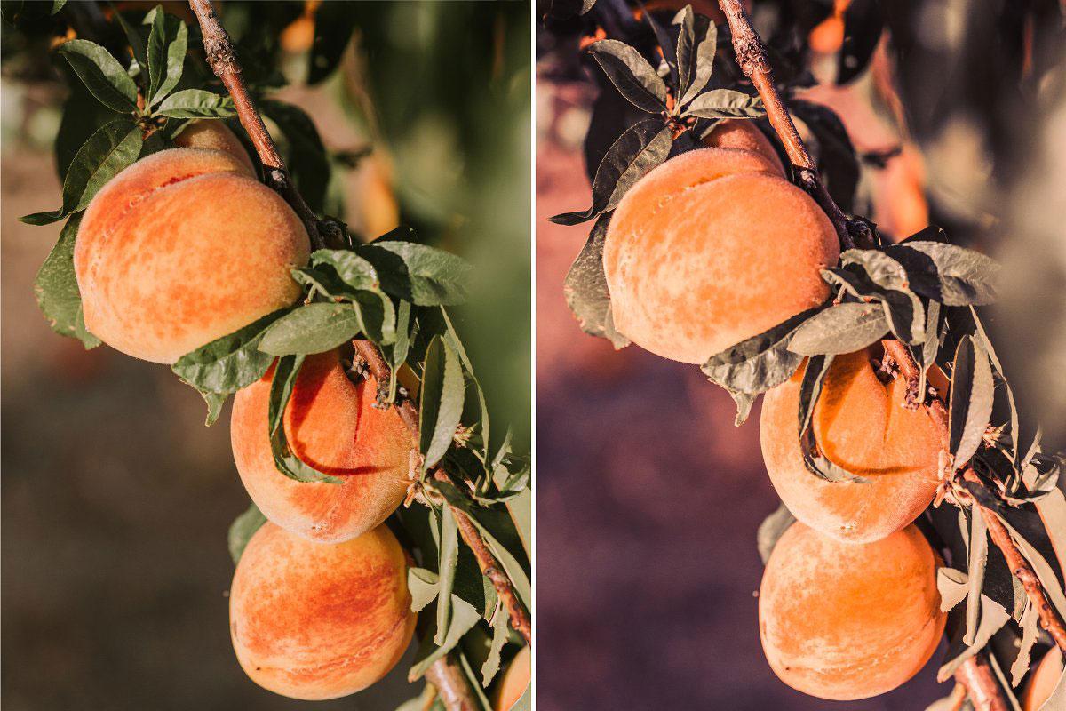 10 Peach %2526 Mango Mobile Presets 5143137.