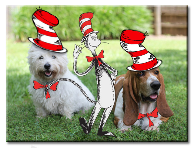 Cat in the Hat with Bentley Basset Hound and Pierre Westie