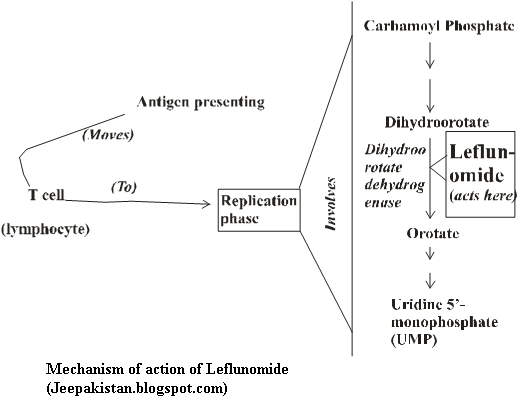 Leflunomide And Methotrexate Combination List Of
