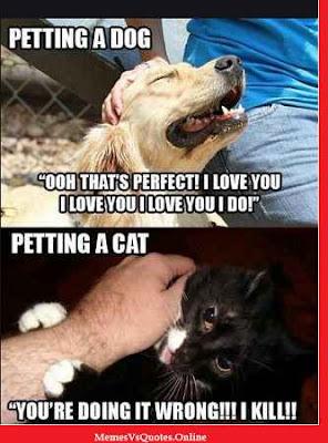 Pet Memes