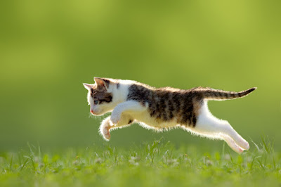Cat people and dog people on twitter and Facebook to learn about dogs, cats and science