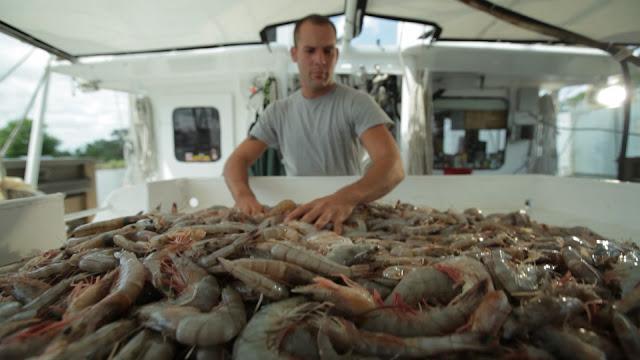 shrimper