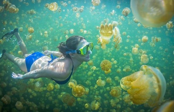 Danau ubur-ubur