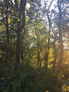 forest in evening light near Peterborough, ON