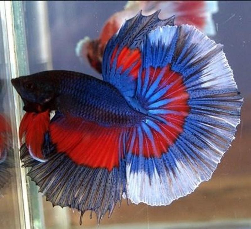 Photo Can a Betta Fish Live in a Bowl
