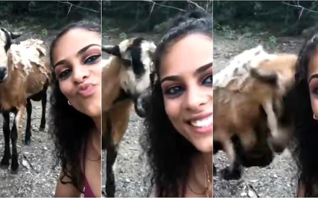 Chica intenta tomarse 'selfie' con una cabra y la golpea en la cabeza