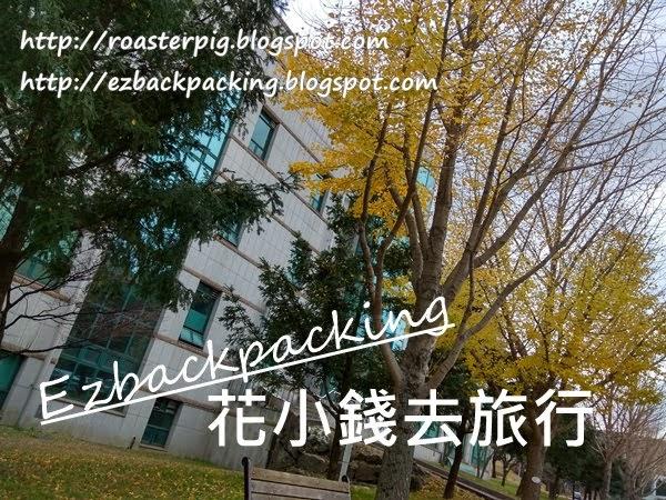 濟州大學銀杏