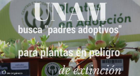 la-unam-busca-padres-adoptivos-para-plantas-en-peligro-de-extincion