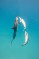 http://www.tropicallight.com/water/dolphins/31jul18dolphins/31jul18dolphins.html