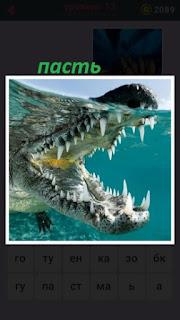 под водой крокодил который открыл пасть с острыми зубами