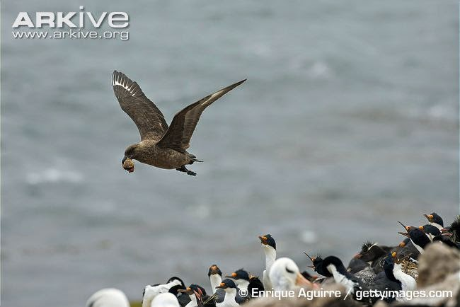 interactions between marine birds