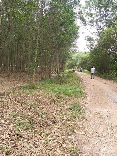 Đất sào Quảng Tiến