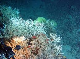 Deep Water Reefs