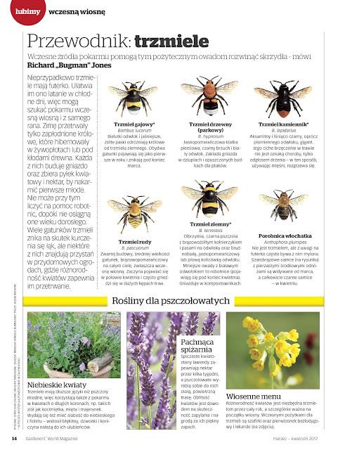 owady pożyteczne, ogród przydomowy
