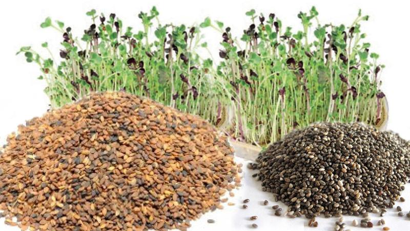 Abcdietas y salud recetas informaci n y gu a las semillas y los germinados en la dieta dukan - Lino 5 metre de large ...