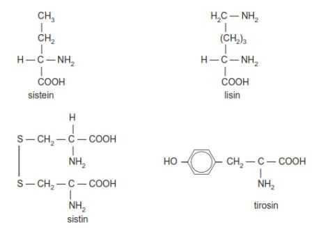 Gugus sistein, lisin, sistin serta tirosin yang merupakan contoh dari asam amino