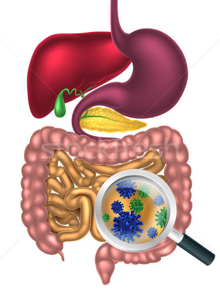 most ideal ways to improve your digestion, how to improve digestion system, tips to improve digestion system